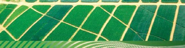 зелен плат